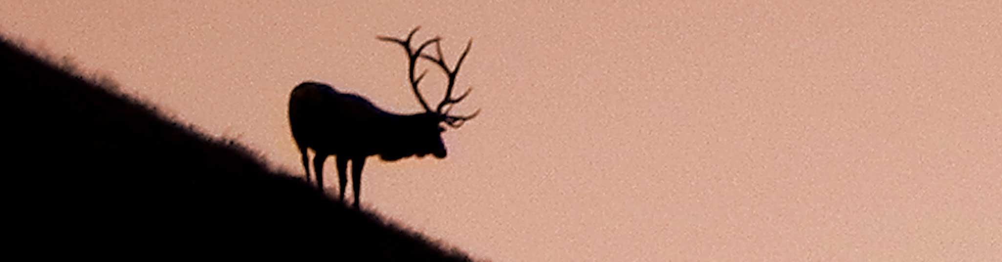 Private Land Elk Hunting