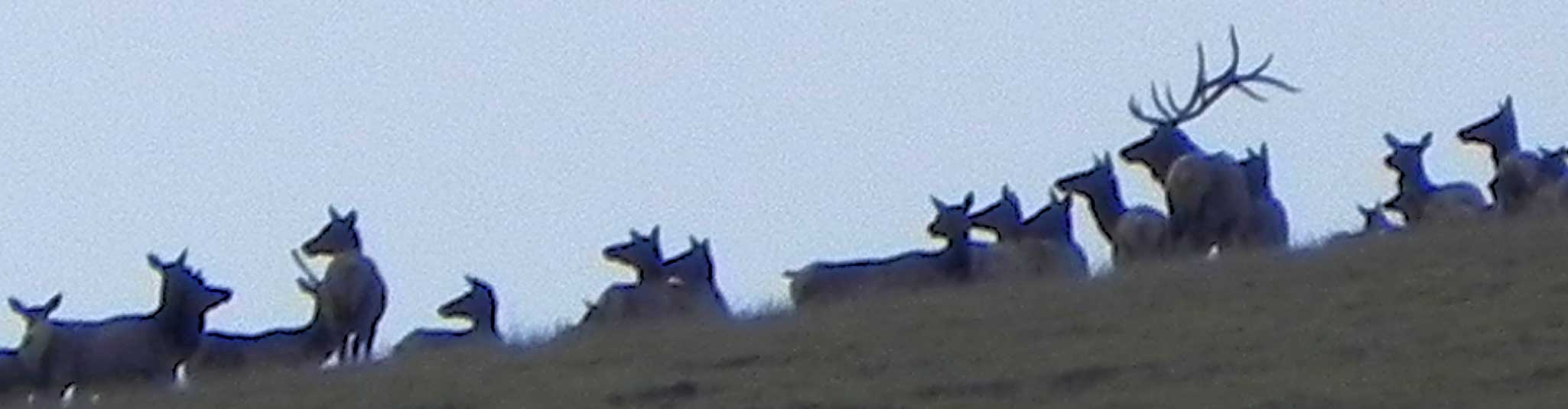 elkhunting