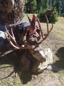 Rifle hunting for Mule Deer
