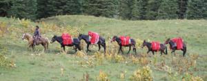Wilderness Pack-in elk hunting
